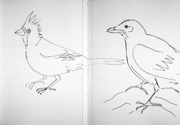 Sketchbook birds 3