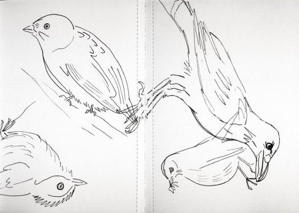 Sketchbook birds 2