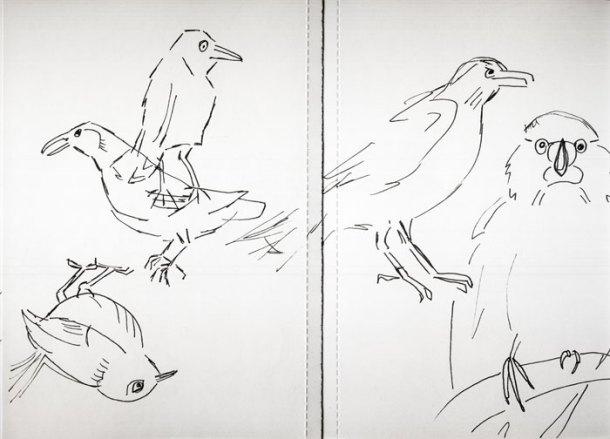 Sketchbook birds 4
