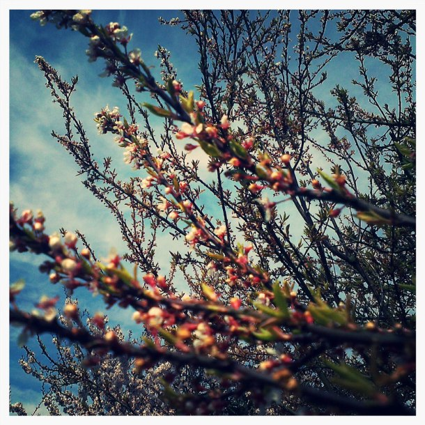 blossom retro photo