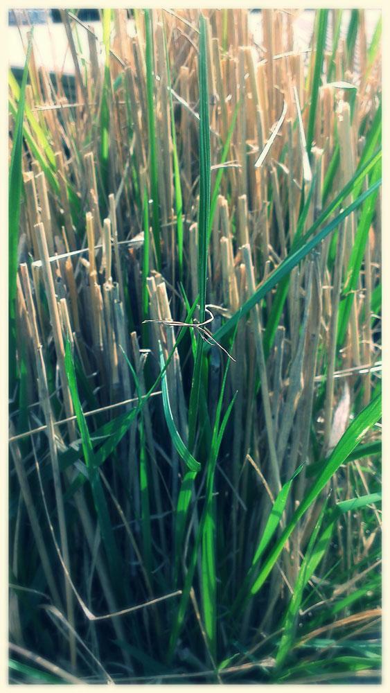 bamboo grass shooting