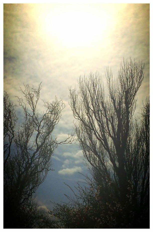 hazy sun in spring
