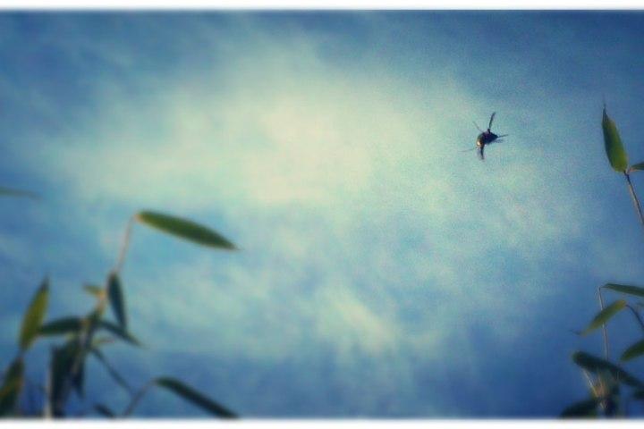 hover fly in spring retro