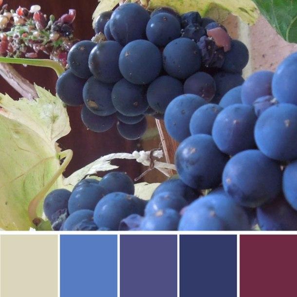 grapes-colour-palette