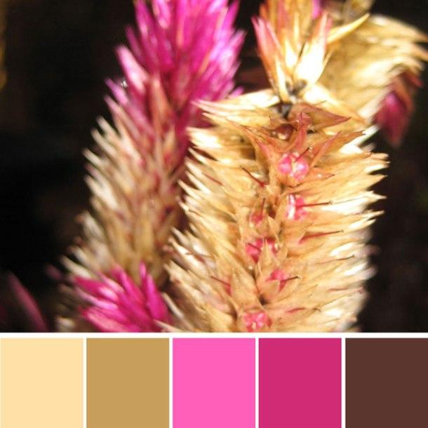 pink-autumn-flower-colour-palette