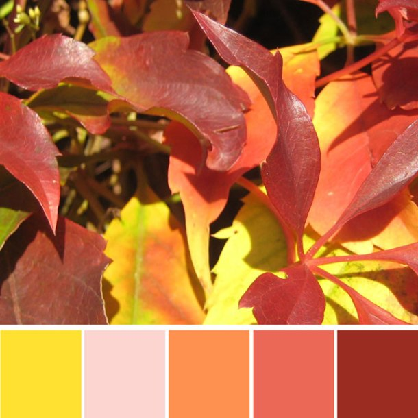 red-autumn-leaves-colour-palette